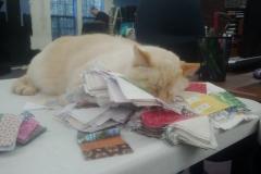 Patch Can Sleep Anywhere