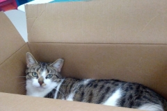 All Of Our Cats Love Boxes - Jazz Is No Exception