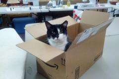 Mama Kat In An Amazon Box