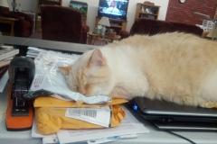 Patch - Sleeping Again