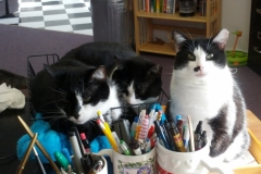 Three Of Our Four Black And White Kitties