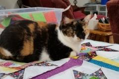 Callie Kitten On A Donation Quilt