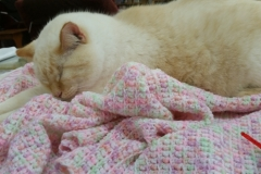 Patch Loves My Crocheted Blankets